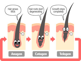 laser-and-ipl-hair-removal-stages-of-hair-growth (1)